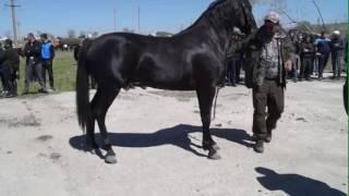 Самые Красивые Лошади Карачаевской породы!!