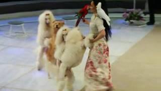 Грандиозная премьера в Нижегородском цирке