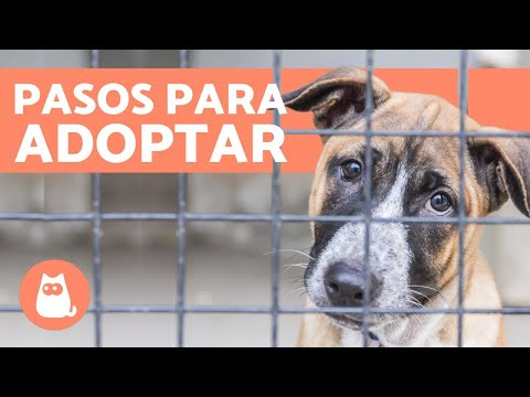 Helping those that don't cope in the kennels! from YouTube · Duration:  1 minutes 59 seconds