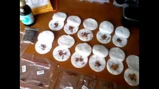 Семена из КИТАЯ)))) Выращивание роз и клубники 2 видео(, 2015-04-07T12:28:20.000Z)