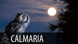 🎧 NOITE DAS CORUJAS ~ Vento, Corujas, Floresta, Noite ~ Relaxar, Acalmar, Dormir ~ CALMARIA ~ ♫057