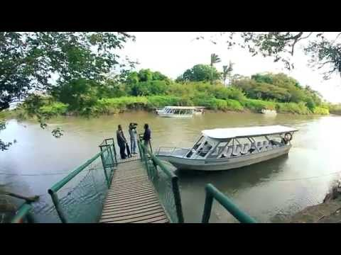 Reportaje para TV - Costa Rica - Rio Tempisque - Cocodrilos - Un cocodrilo se come a otro