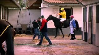 Megamindy - De Paardenrace