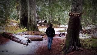 Roosevelt Grove Ancient Cedars