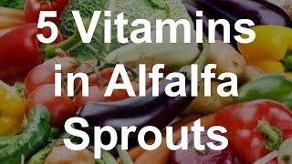 5 Vitamins in Alfalfa Sprouts - Health Benefits of Alfalfa Sprouts