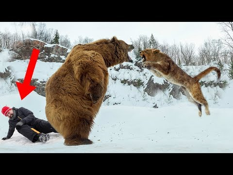 Wild Animals That SAVED Human Lives!