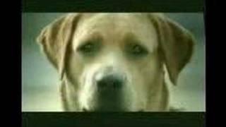 AldatılaN KöpeK