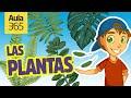 Partes de las Plantas y la Fotosíntesis   Videos Educativos para Niños