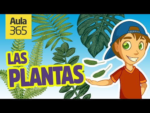 partes-de-las-plantas-y-la-fotosíntesis-|-videos-educativos-para-niños