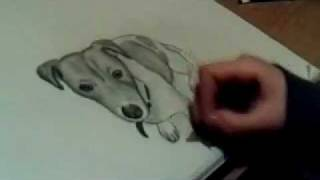 Jack Russell speed drawing ( pencil and blending stub )