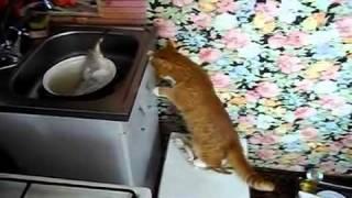 Cat and Fish (Кот и рыба)