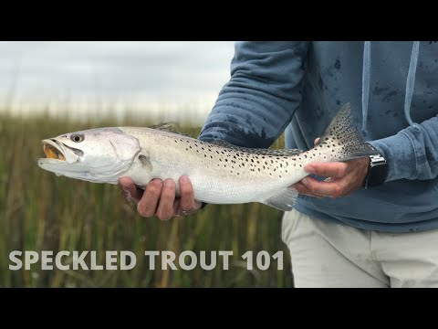 All Thing Speckled Trout With Capt. Brian Saunders