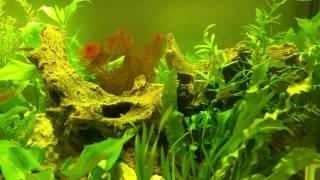 Aquarium 250 Liter in der Einrichtungsphase 2016-08-27