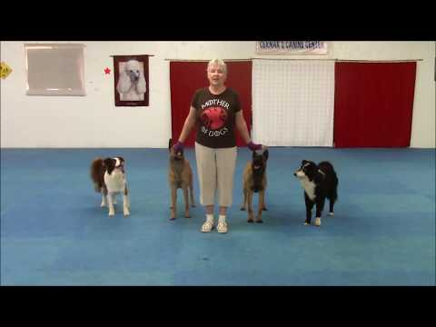 Belgian Malinois and Border Collies May 2018