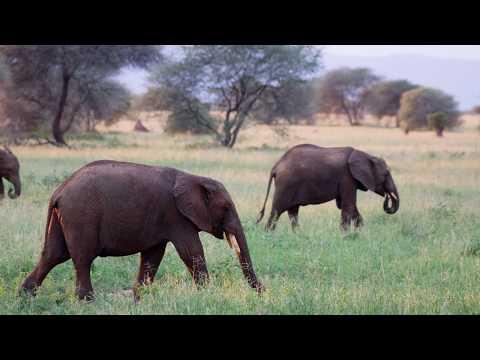 טנזניה - שמורת ארושה Tanzania - Arusha national Park