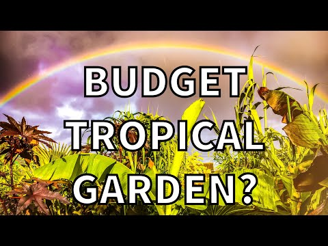 How to Grow a UK Tropical Garden on a Budget