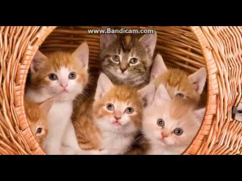 Анимации про котов