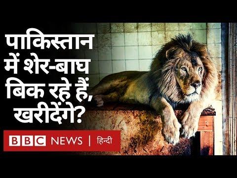 Pakistan में बिक रहे हैं शेर और बाघ, ख़रीदना चाहेंगे? (BBC Hindi)