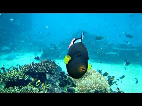 Incredible Fish At Seaworld Gold Coast Australia