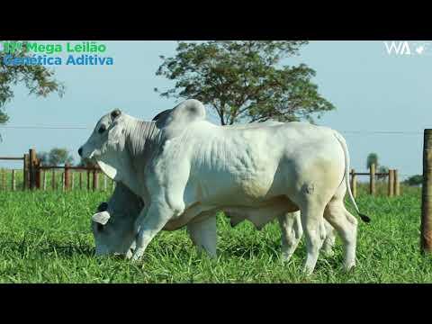 LOTE 153 - DUPLO - REMC A 1875, REMP 573 - 17º Mega Leilão Genética Aditiva 2020