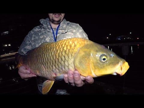 SOLID CARP And A Mirror Carp Too! - Carp Fishing NSW