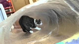透明の袋で作る猫ホイホイ、波のチューブにいるかのごとく