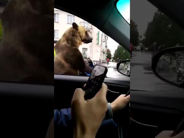 ¿Un oso en un sidecar es posible? ¿Y tocando la trompeta?