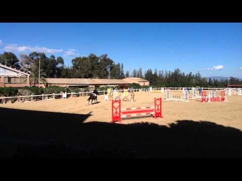 MICHALIS MICHAEL HORSE JUMPING SHOW