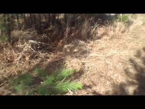 Clearing out small trees and grass
