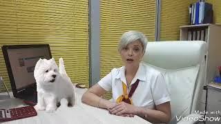 Авиаперелет с кошкой и собакой