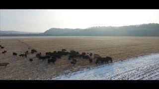 winter grazing cover crops northeast iowa