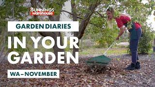 Gardening in November | WA | Bunnings Garden Diary