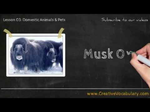 Domestic Animals & Pets Vocabulary Picture Video Lesson -  Learn List of Domestic Animals & Pets - 4