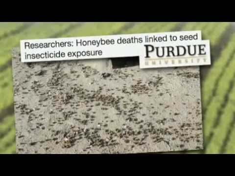 Killing Bees - Are Government And Industry Responsible - Ear
