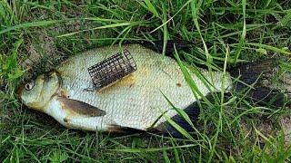 Ловлю Леща на Фидер Рыбалка на Фидерную Оснастку Рыбалка Осенью (Фидер Видео) – MF №78