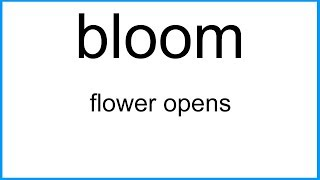 bloom      The New English Dictionary