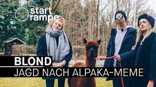 Baixar Blond suchen das perfekte Alpaka-Meme (Startrampe)