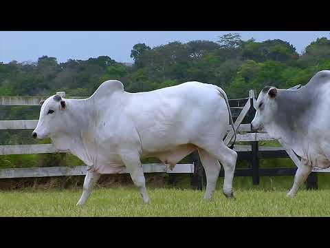 LOTE 120   FHGN A 2567, 2272 DUPLO