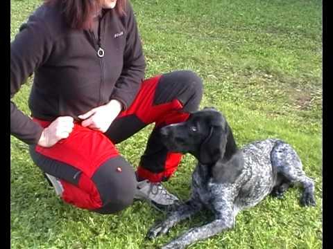 Kontakt- och koncentrationsövning med hund