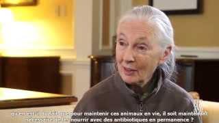 Jane Goodall : Etre végétarien pour le futur de la planète, le bien-être animal et la santé