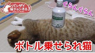 バンザイ猫、アイちゃんを中心に日々のバンザイ寝の様子をお届けします...