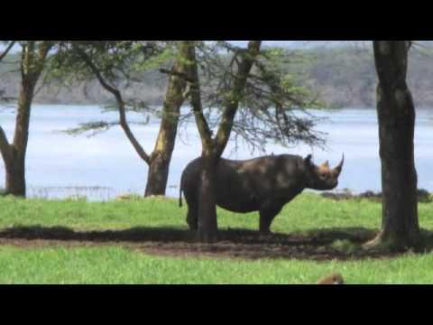 Safari at Lake Nakuru