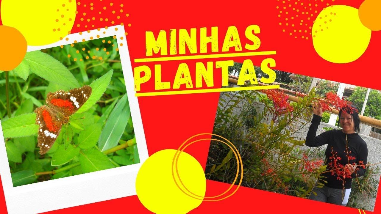 Vlog- Algumas das minhas plantas e árvores- 2 tipos de Colorau