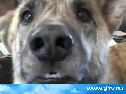 Здесь собраны самые популярные ролики рунета!