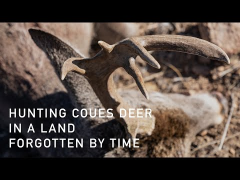 Coues Deer Rifle Hunting In Sonora, Mexico