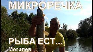 Микроречка.  Рыба ест...  Могилев.