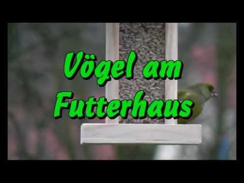 Vögel am Futterhaus - YouTube