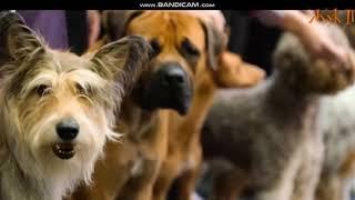 Грустный стих про собаку