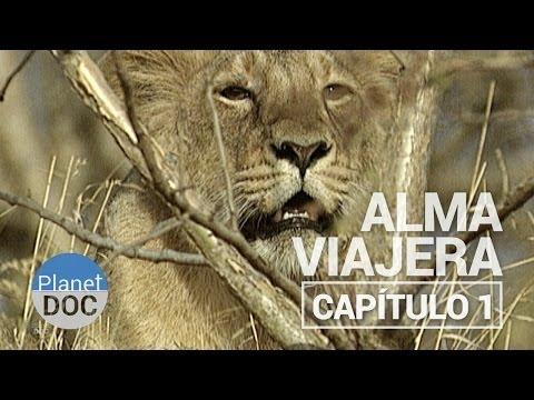 Alma Viajera | Capítulo 1 - Documental Completo