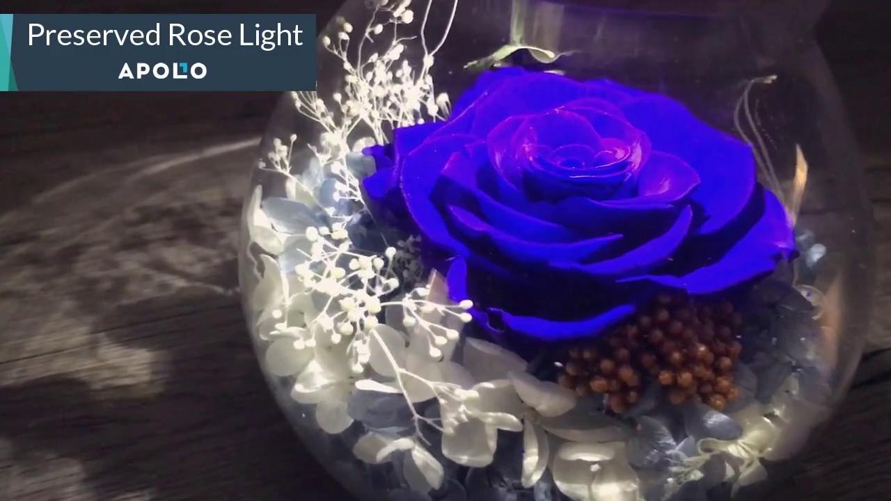Preserved Rose Light Instruction